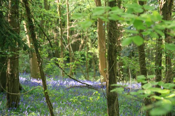 woods-600